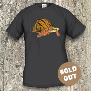 Turtles Model 11, Cuora trifasciata trifasciata, Sold Out, Black T-shirt