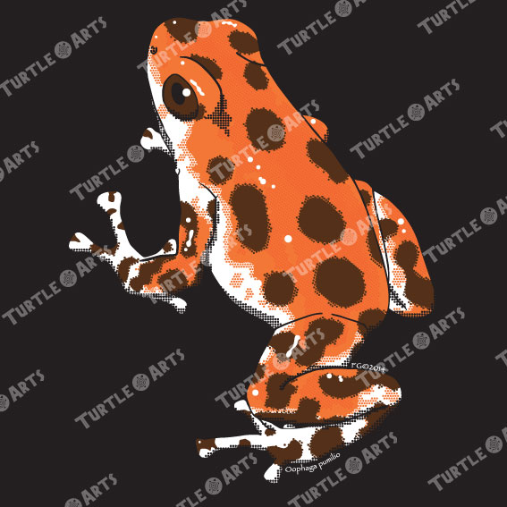 Frogs/Toads Model 2, Oophaga pumilio, ARTWORK