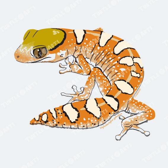 TLM1b Diplodactylus galeatus artwork