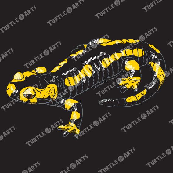 TSM1 Salamandra salamandra terrestris artwork