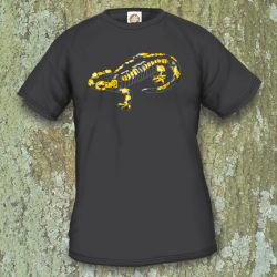 TSM1 Salamandra salamandra terrestris