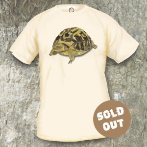 Turtles Model 14 Sold Out